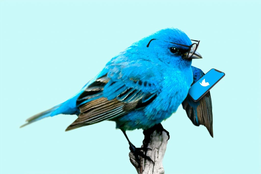 parse-twitter-usernames